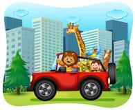 Wilde dieren die op rode jeep berijden stock illustratie