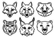 Wilde dieren hoofdroofdieren Stock Afbeeldingen