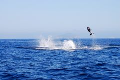 Wilde dolfijn royalty-vrije stock fotografie