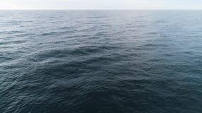Wilde dolfijnensprong uit van water schot Hoogste mening over blauwe rimpelingen van oceaan die gedeeltelijk dolfijnen het spring stock footage