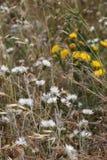 Wilde dornige Anlagen und Blumen Stockfotografie
