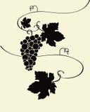 Wilde Druiven royalty-vrije illustratie