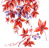 Wilde druiventak Stock Afbeelding