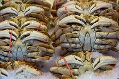 Wilde Dungeness-Krabben op Ijs bij Markt Stock Afbeeldingen