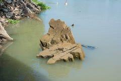 Wilde eend Duck Sleeping op een oude Boomstomp stock foto's
