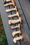 Wilde eetbare paddestoelen op natte houten bank Stock Fotografie