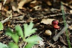 Wilde eiken spruit in het bosfotobeeld stock foto