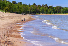 Wilde einsame Strandlandschaft, -meer und -paare Krähen Stockfotografie