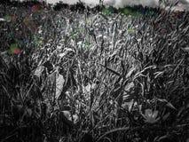 Wilde englische Wiese in Schwarzweiss stockfotos