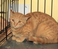 Wilde erschrockene Katze in einem Käfig Stockbild