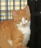 Wilde erschrockene Katze in einem Käfig Stockfotos