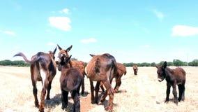 Wilde Esel im Naturvideo stock footage