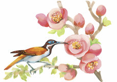 Wilde exotische Vögel des Aquarells auf Blumen Stockfotografie