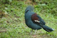 Wilde exotische vogel Royalty-vrije Stock Foto