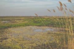 Wilde Feuchtgebiete Stockbild