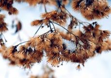 Wilde flaumige Blumen und Stämme des trockenen toten Grases unter der dynamischen Zusammensetzung der Sonnenform auf einem Schnee lizenzfreie abbildung
