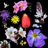 Wilde flora van Griekenland Stock Afbeelding