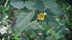Wilde flower2 royalty-vrije stock afbeeldingen