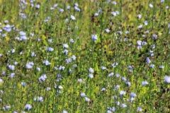 Wilde floweres in fild Stock Afbeeldingen
