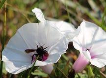 Wilde floweres op het gebied Stock Afbeelding