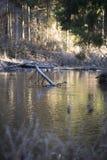 Wilde Flusslandschaft im Nationalpark stockbilder