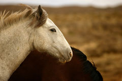 Wilde Fohlen-Wüste Stockfotografie