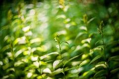 Wilde Forstpflanzen Stockfotos