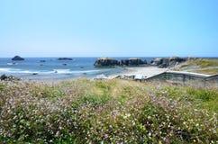 Wilde fowers, welche die Treppe unten führt, um auf den Strand zu setzen übersehen Lizenzfreie Stockfotografie