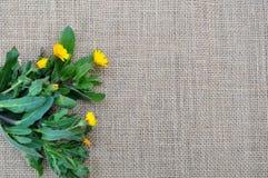 Wilde Frühlingskräuter auf einer Leinwand Stockfotografie