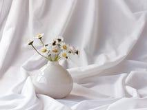 Wilde Gänseblümchen in einem kleinen Vase Stockfotografie