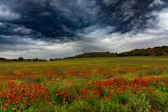 Wilde gebieden met bloemen en wolken stock afbeeldingen