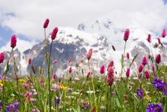 Wilde Gebirgsblumen stockbild