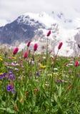 Wilde Gebirgsblumen lizenzfreie stockbilder