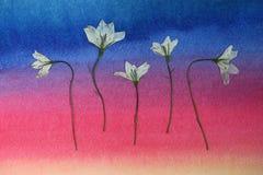 Wilde gedrukte bloemen Stock Foto