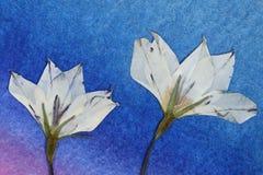 Wilde gedrukte bloemen Stock Foto's
