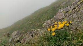 Wilde gelbe Blumen stockfotografie