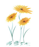 Wilde gelbe Blumen des Aquarells auf einem weißen Hintergrund Lizenzfreies Stockfoto