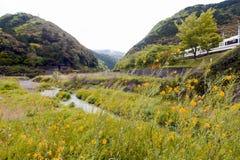 Wilde gelbe Blumen durch Uno River in Kameoka, Kyoto, Japan Lizenzfreies Stockbild