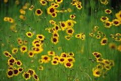 Wilde gele bloemen royalty-vrije stock afbeeldingen