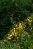 Wilde gele bloemen binnen stroomopwaarts Royalty-vrije Stock Foto's