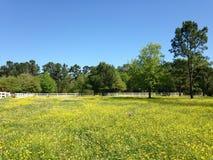 Wilde gele bloemen in een land die met witte omheining plaatsen Stock Afbeeldingen