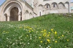Wilde gele bloemen, Groen gras op achtergrondtempel stock fotografie
