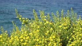 Wilde gele bloemen op een achtergrond van blauwe overzees stock videobeelden
