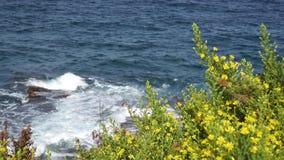 Wilde gele bloemen op een achtergrond van blauwe overzees met vlinder stock videobeelden