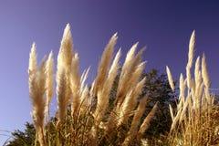Wilde Gräser lizenzfreies stockbild