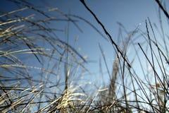 Wilde Gräser Stockfotografie