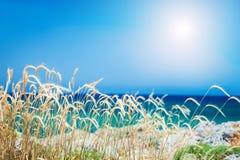 Wilde Gräser auf der Seeküste Stockbilder