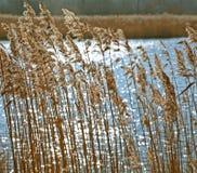 Wilde Gräser gegen funkelndes Wasser Stockfotos