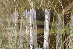 Wilde Gräser wachsen auf dem Strand in Lac$bernerie-en-c$retz (Frankreich) Lizenzfreies Stockfoto
