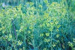 Wilde grüne Rasenfläche stockfotos